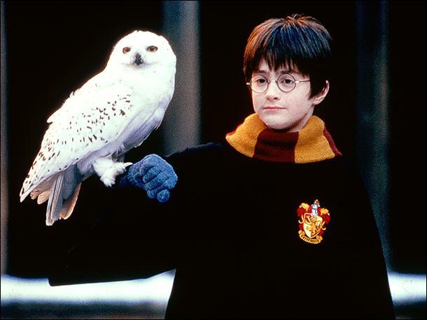 Comment se nomme l'oiseau d'Harry ?