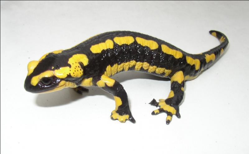 Amphibien légendaire qui était réputé pour vivre dans le feu et s'y baigner, et ne mourait que lorsque celui-ci s'éteignait !