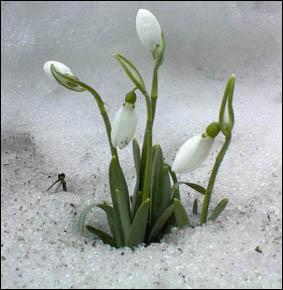 Pousse et fleurit en hiver !