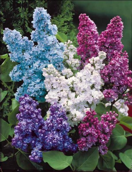 Fleur, couleur, senteur !
