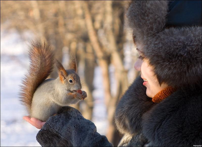 Grâce au toupet de poils sur les oreilles, on peut savoir que cet écureuil est européen !