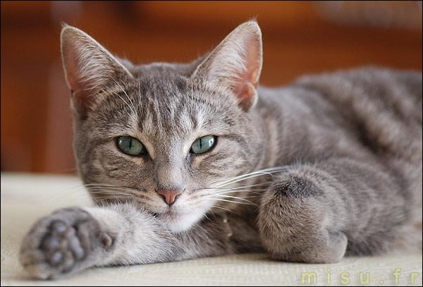 Quelle est l'association des 2 marques qui ont pour effigie l'animal qui ressemble à un chat ?
