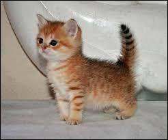 Et ce petit poilu, c'est un :