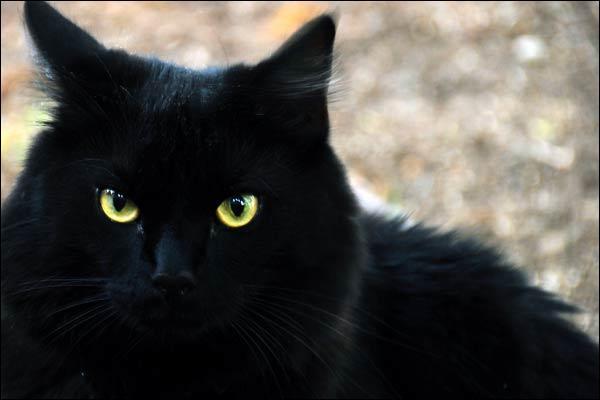 Ce gros chat noir est un sale type, un ennemi de Mickey, un vrai méchant, chez Walt Disney, il est apparu avant Mickey, le connais-tu ?