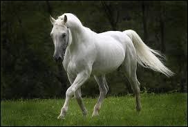 Tu as vu ce cheval dans  Raiponce , c'est le cheval policier de Flynn Rider !