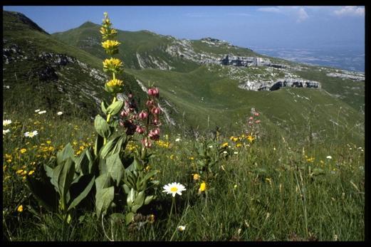 Proche du parc régional du Haut-Jura vous apprécierez le calme de ---- situé dans le département du Doubs, région -------.
