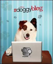 Stan a une grande capacité qui n'est pas donnée à tous les chiens, laquelle ?