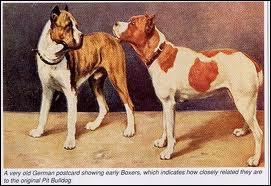 Quel est l'ancêtre du chien ?