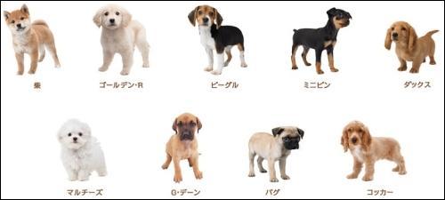 Quelle proposition des noms de tous ces chiens est-elle bonne ?