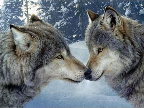 Qui est madame loup ?