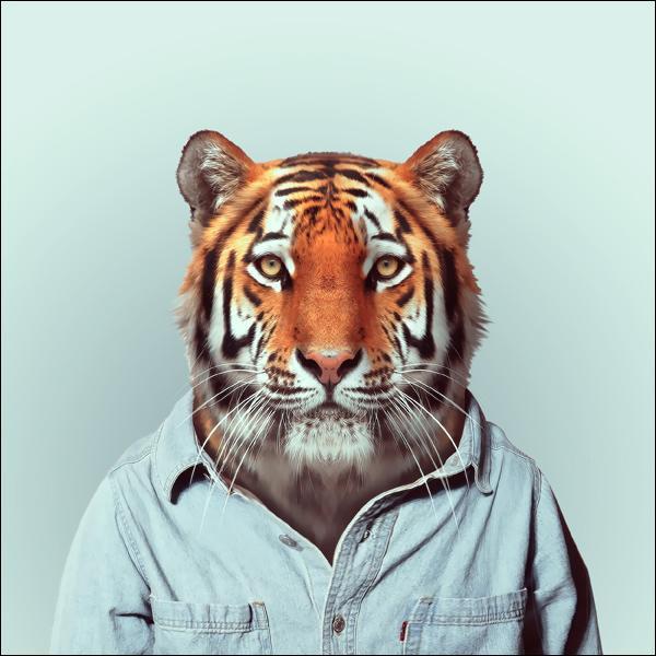 Cet animal en tenue décontractée, mais faut-il s'y fier, est un :