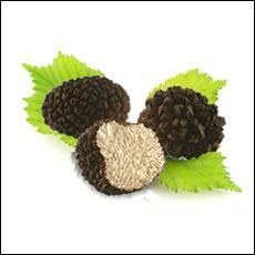 Comment s'appellent les truffes d'été ?