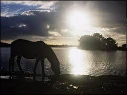 Combien un cheval boit-il en moyenne ?