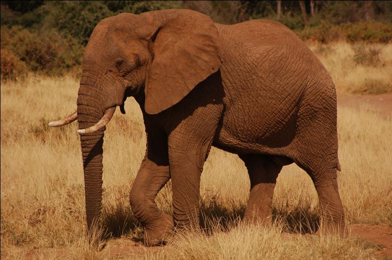 Savez-vous les différencier ? Quel est cet animal ?