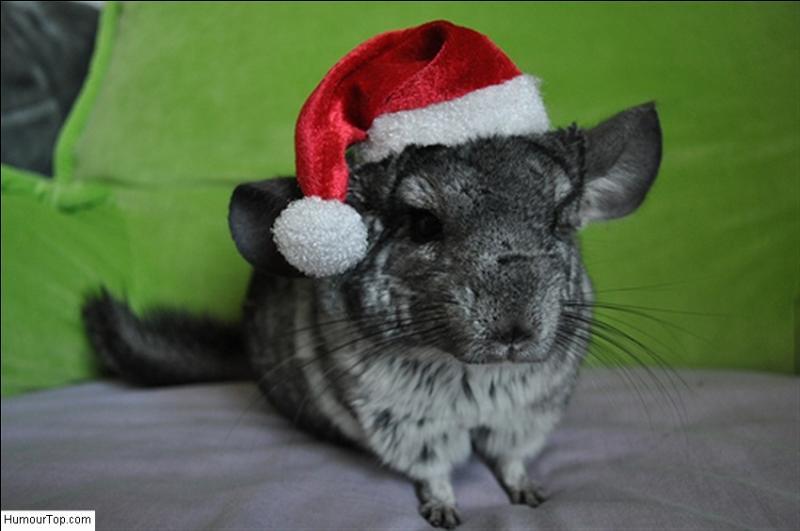 Ce lapin est déguisé en père Noël !