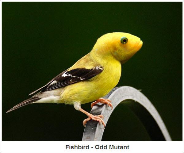 Cet oiseau bizarre vient d'être découvert en Amazonie, il a une particularité, il n'a pas de bec !