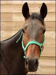 Peut-on aborder le cheval s'il a les oreilles vers l'avant et le regard confiant ?