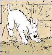 Comment s'appelait le chien de Tintin ?