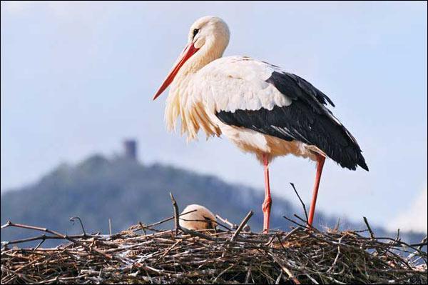 Quel est le nom des habitants de la commune représentée par cet oiseau ?