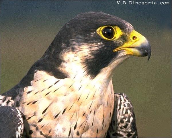 La commune portant le nom de cet oiseau abrite :