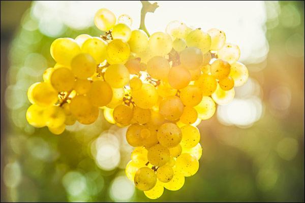 De quelle région provient le vin appelé Riesling ?