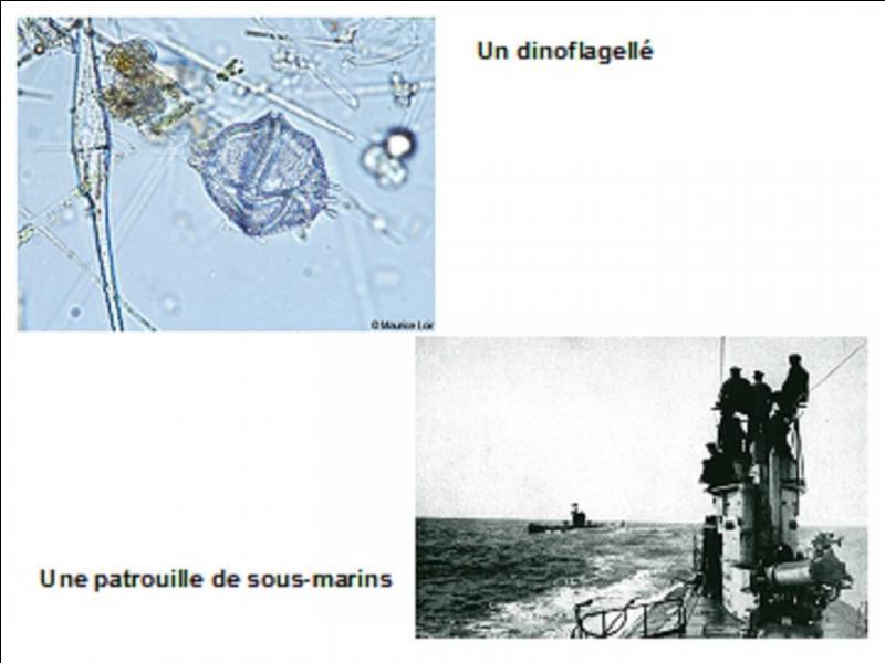 Le 8 novembre 1918, pendant la 1e Guerre mondiale, un sous-marin allemand aurait été coulé car il a été détecté d'une façon très particulière. Comment a-t-il été détecté ?