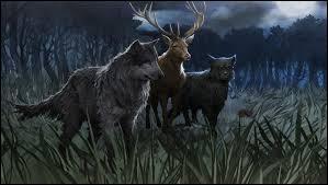 Citez les deux surnoms de Sirius lorsqu'il est changé en chien.