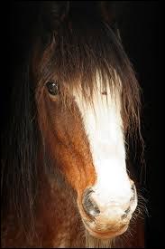 Qu'est-ce que ce cheval a sur sa tête ?