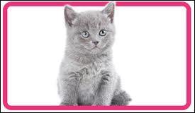 Combien a-t-il de chatons ?