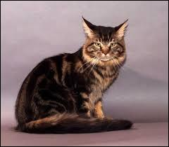 Combien d'heures par jour un chat adulte doit-il dormir ?