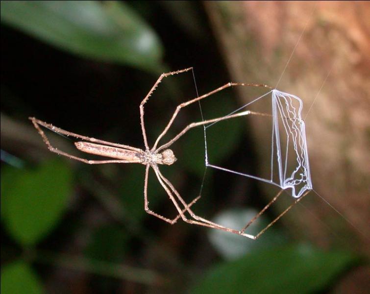 Quel rapport entre cette araignée et le titre d'un album d'Astérix, me direz-vous ? Et pourtant, on est en plein dedans !