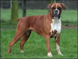 Cette race de chien vous donne le nom d'un modèle que l'on retrouve chez ...