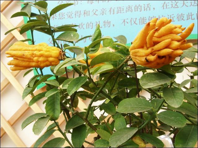 Il s'agit à présent d'un fruit, à vous de le trouver, vous avez la main !