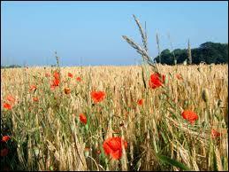Quel homme d'église peut-on voir gambader dans un champ de blé sur une musique d'Ennio Morricone ?