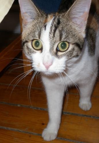 Nos amis les bêtes : spécial chats !