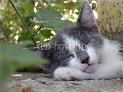 Qui est ce chat ? (Rappel : il appartient obligatoirement au clan du Tonnerre)