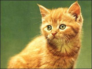 Qui est ce chaton ?