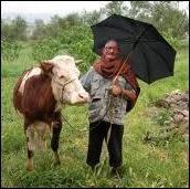 Quand il pleut en abondance, on dit qu'il pleut comme ...