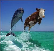 Qu'est-ce que le plancher des vaches ?