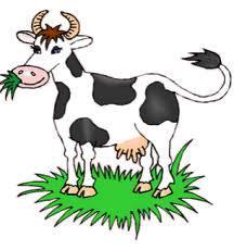 La vache dans les expressions