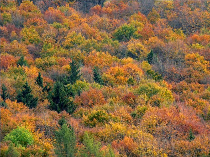 Que fait une feuille décidue, à l'automne ?