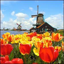 Quelle est la plus grande ville (la plus peuplée) des Pays-Bas ?