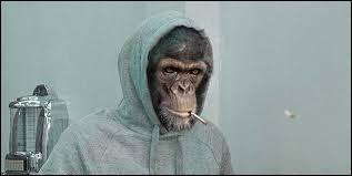 Ce n'est pas à un primate âgé que l'on peut donner la leçon !