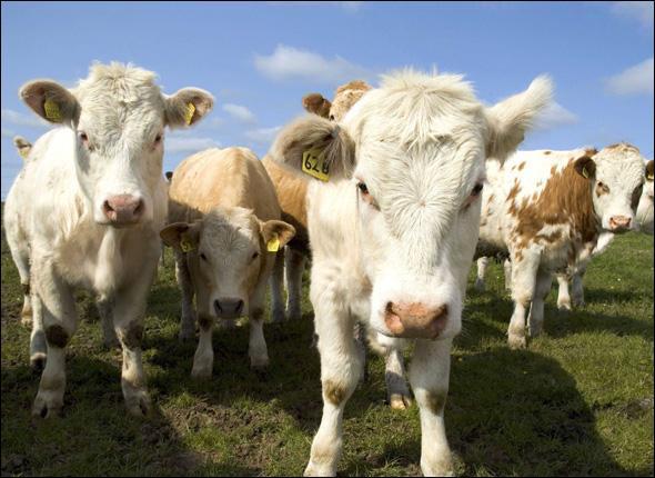 Une profession pour chacun, et le bétail restera où il est !