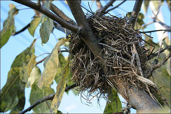 Doucement, doucement, commence la nidification !