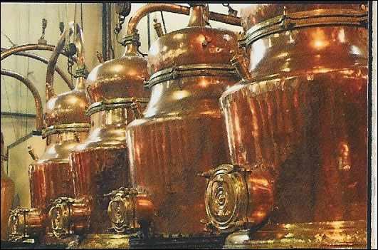 28 plantes locales macérées, chauffées et distillées pour soulager les maux ! Où fabrique-t-on encore cet élixir qu'est la Bénédictine, inventé en 1510 par le frère Vincello ?