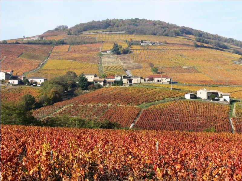 Entrez dans la cave voûtée de La Chaize, en Beaujolais, et enivrez-vous des arômes d'un vin d'exception d'appellation :
