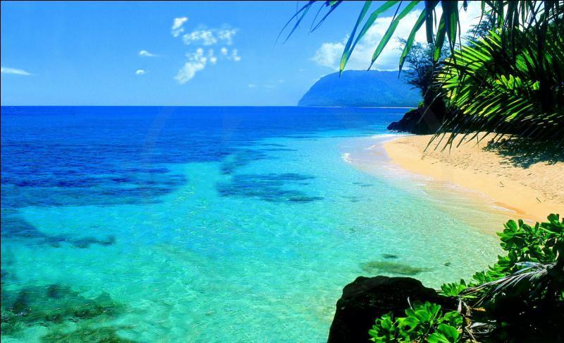 Quel dessin animé se déroule sur l'île d'Hawaï ?