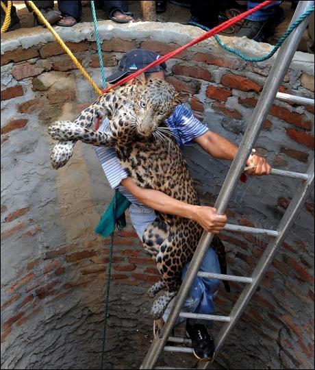 Le léopard, ou panthère, vit en Afrique et en Asie !