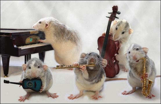 """Il a existé un groupe de rock irlandais qui s'appelait """"The Boomtown Rats"""" !"""